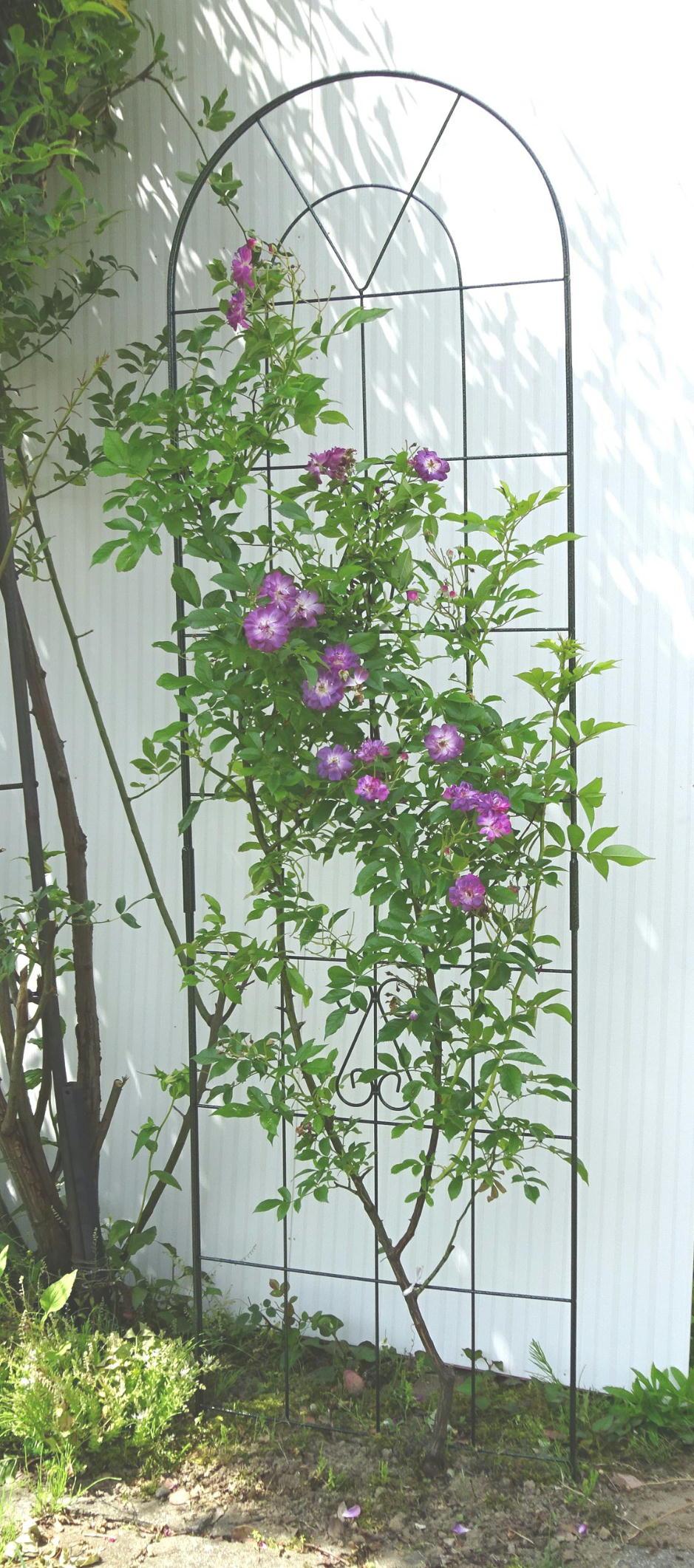 http://gr-garden.com/183-image1.jpg