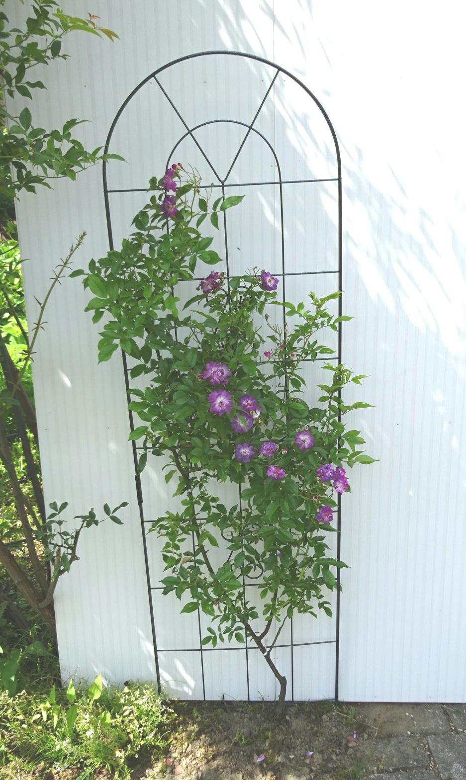 http://gr-garden.com/183-image2.jpg