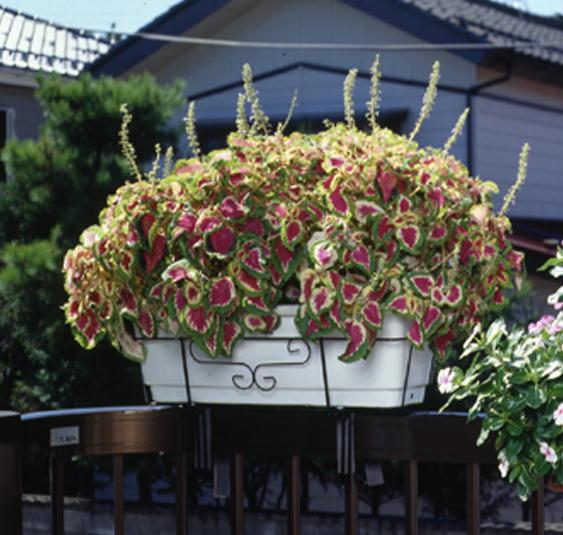 http://gr-garden.com/260-image2.jpg
