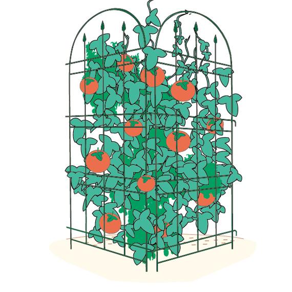 http://gr-garden.com/Torefen2P.jpg
