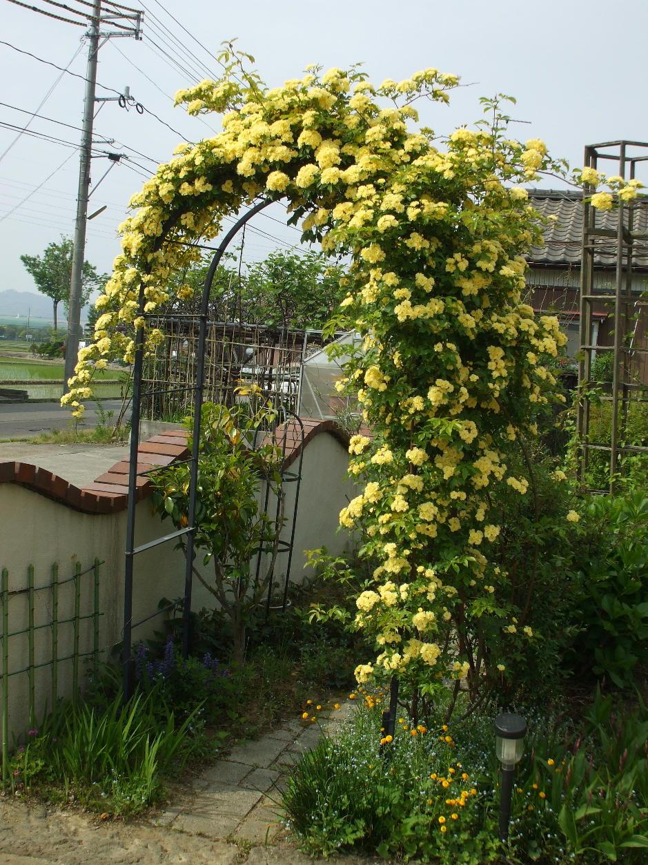 http://gr-garden.com/arch-c-image1.jpg