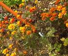 garden-pro-flower1.jpg
