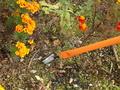 garden-pro-flower2.jpg