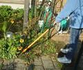 garden-pro-flower4.jpg