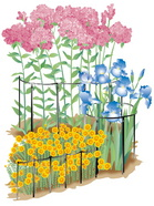 flower-guard-illustration.jpg