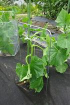 seedling-cover-step1.jpg