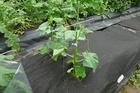 seedling-cover-step1a.jpg