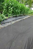 seedling-cover-step1b1c.jpg