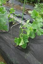 seedling-cover-step2.jpg
