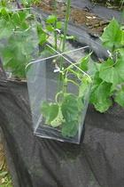 seedling-cover-step3.jpg