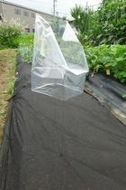 seedling-cover-step3c.jpg