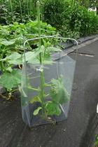 seedling-cover-step4a.jpg