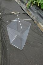 seedling-cover-step4b4c.jpg