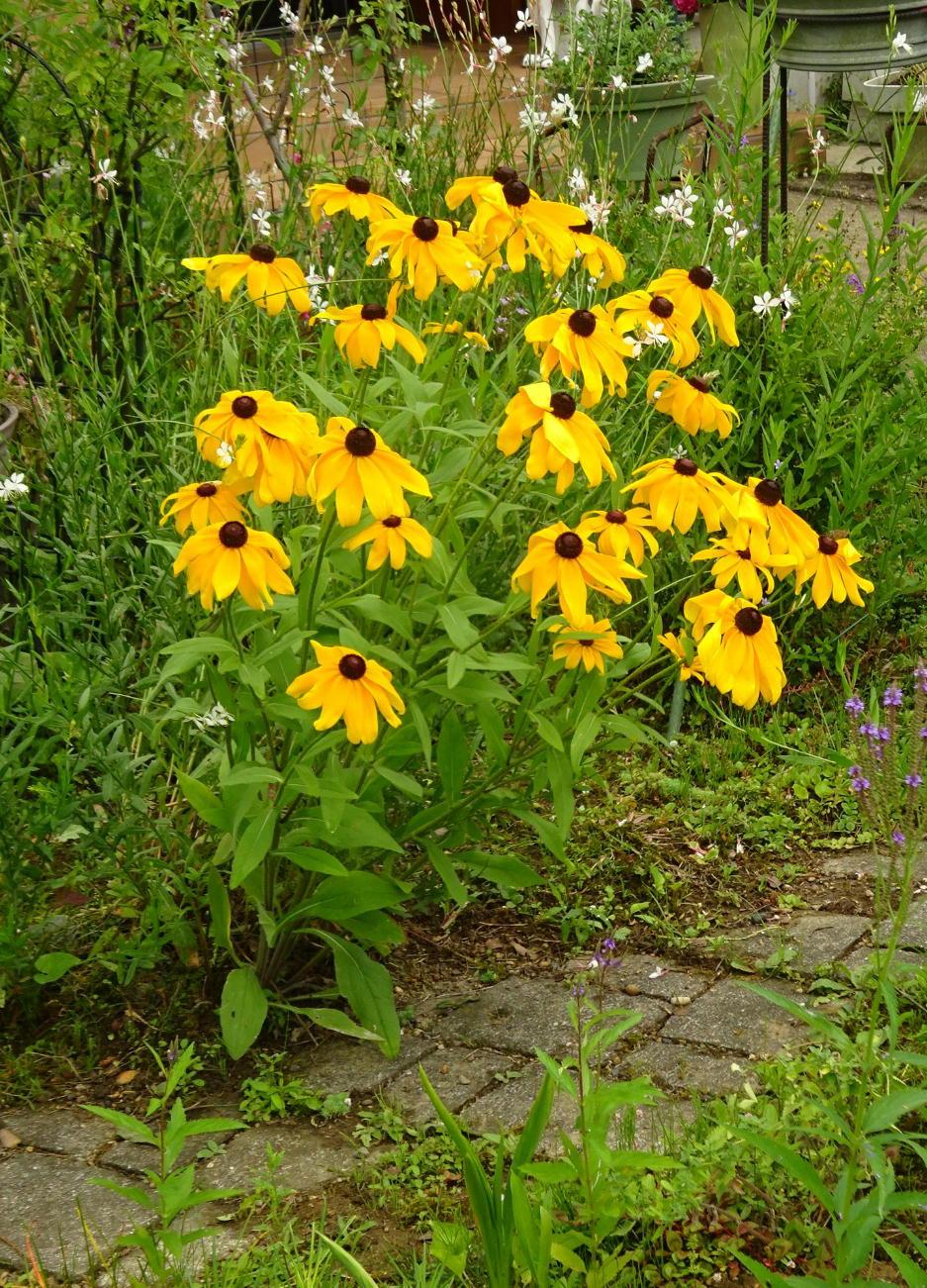 http://gr-garden.com/beru-image%20before.jpg