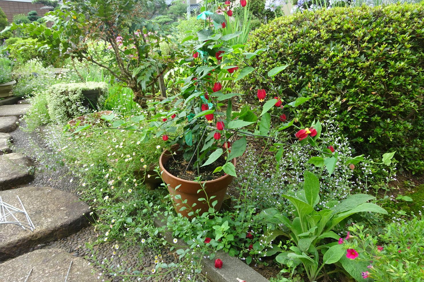 http://gr-garden.com/flower-guard-image11.jpg