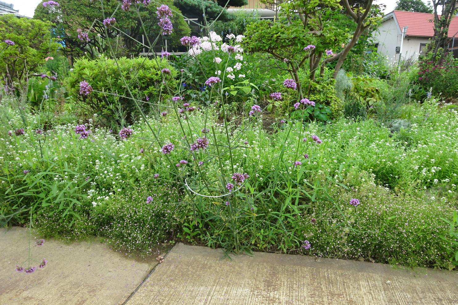 http://gr-garden.com/flower-guard-image13.jpg
