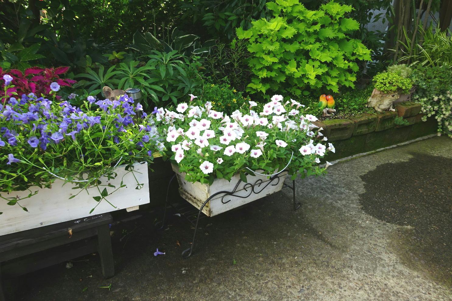 http://gr-garden.com/flower-guard-image3.jpg