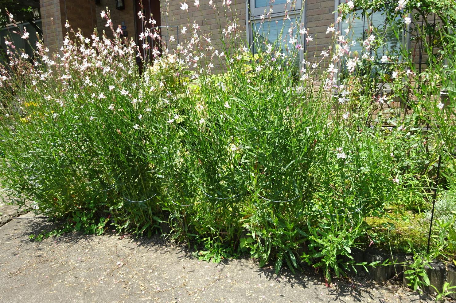 http://gr-garden.com/flower-guard-image6.jpg
