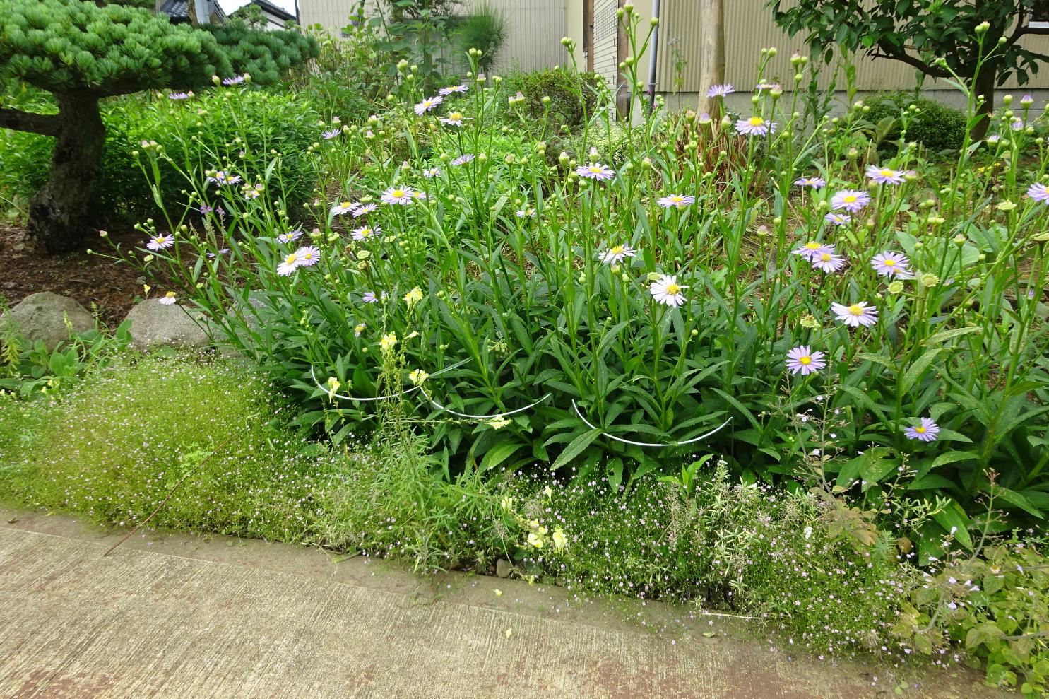 http://gr-garden.com/flower-guard-image7.jpg