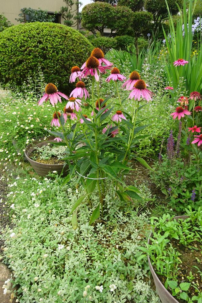 http://gr-garden.com/flower-guard-image8.jpg