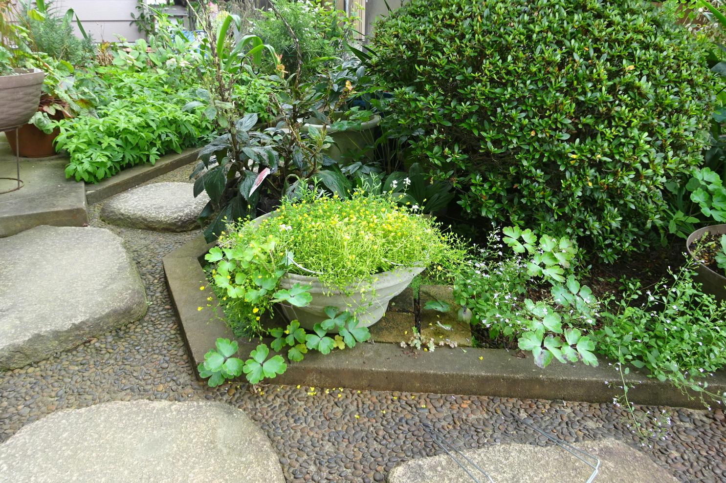 http://gr-garden.com/flower-guard-image9.jpg