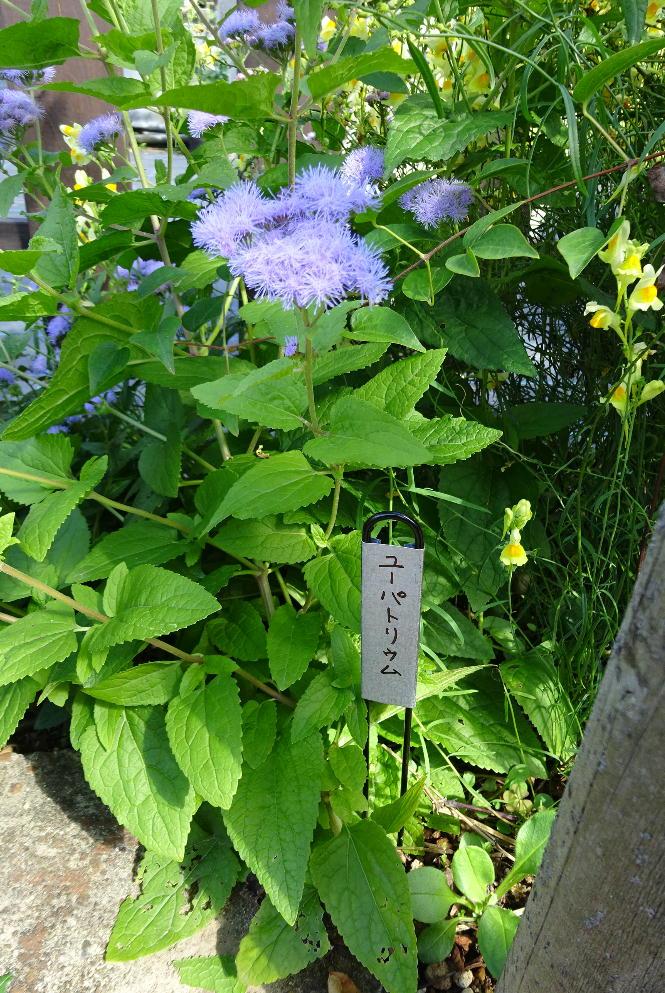 http://gr-garden.com/fpmarker302-image2.jpg