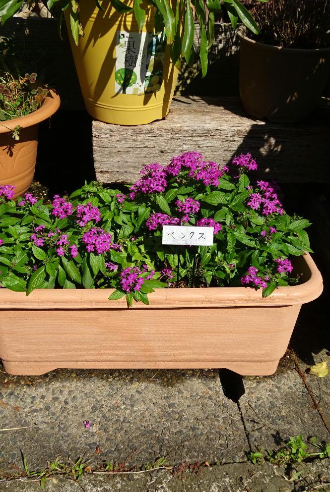 http://gr-garden.com/fpmarker303-image1.jpg