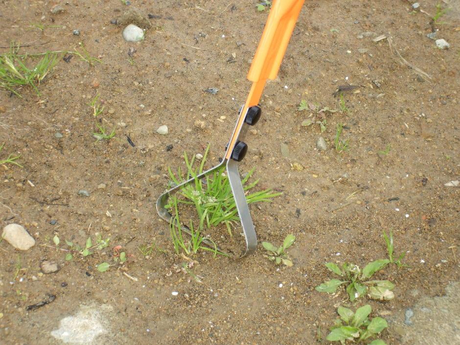 http://gr-garden.com/garden-pro-grass1.jpg