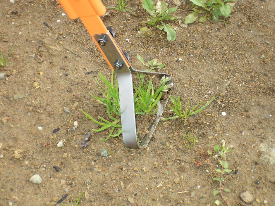 http://gr-garden.com/garden-pro-grass2.jpg