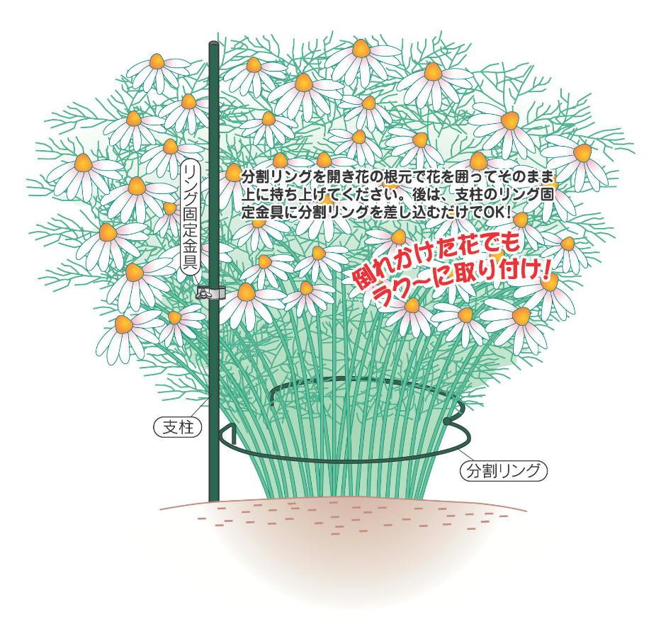 http://gr-garden.com/hatarenu-point2.jpg