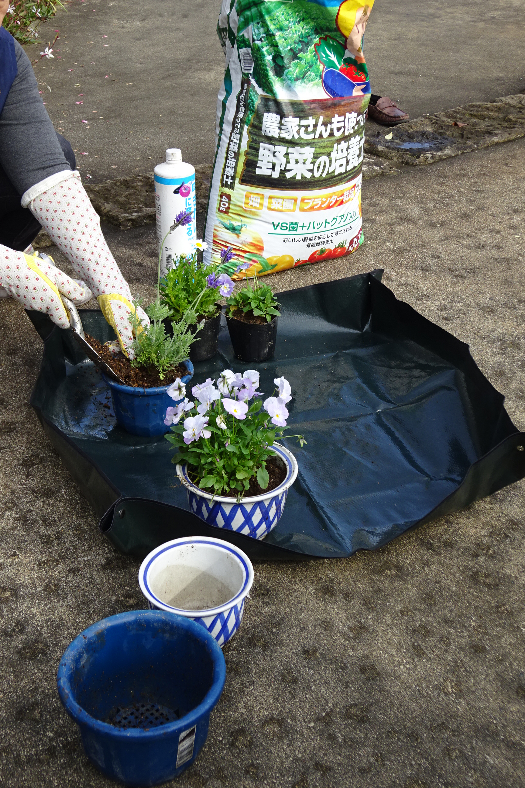 http://gr-garden.com/item/grass_cut/n-sheet-image5.JPG