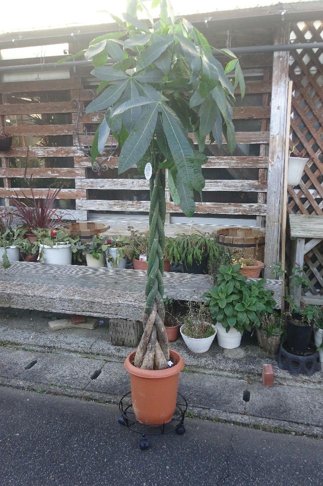 http://gr-garden.com/item/planter/stand-on-casters-image1.jpg