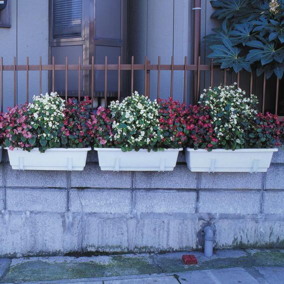 http://gr-garden.com/plahan-95-image.jpg