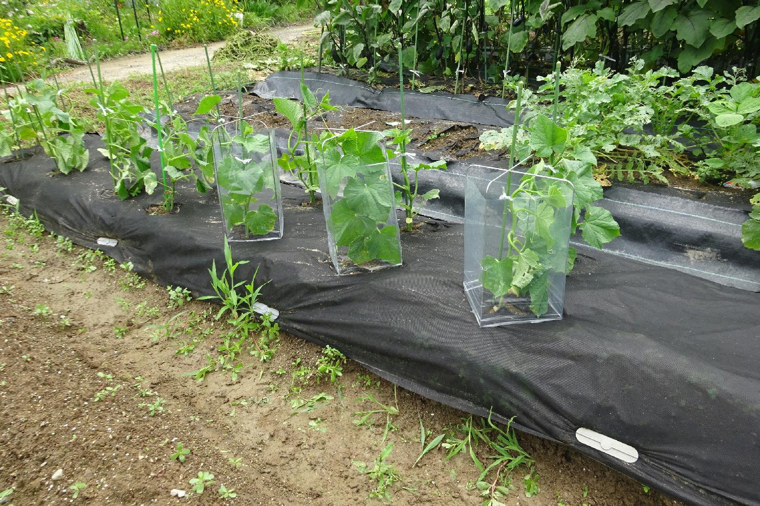http://gr-garden.com/seedling-cover-image1.jpg