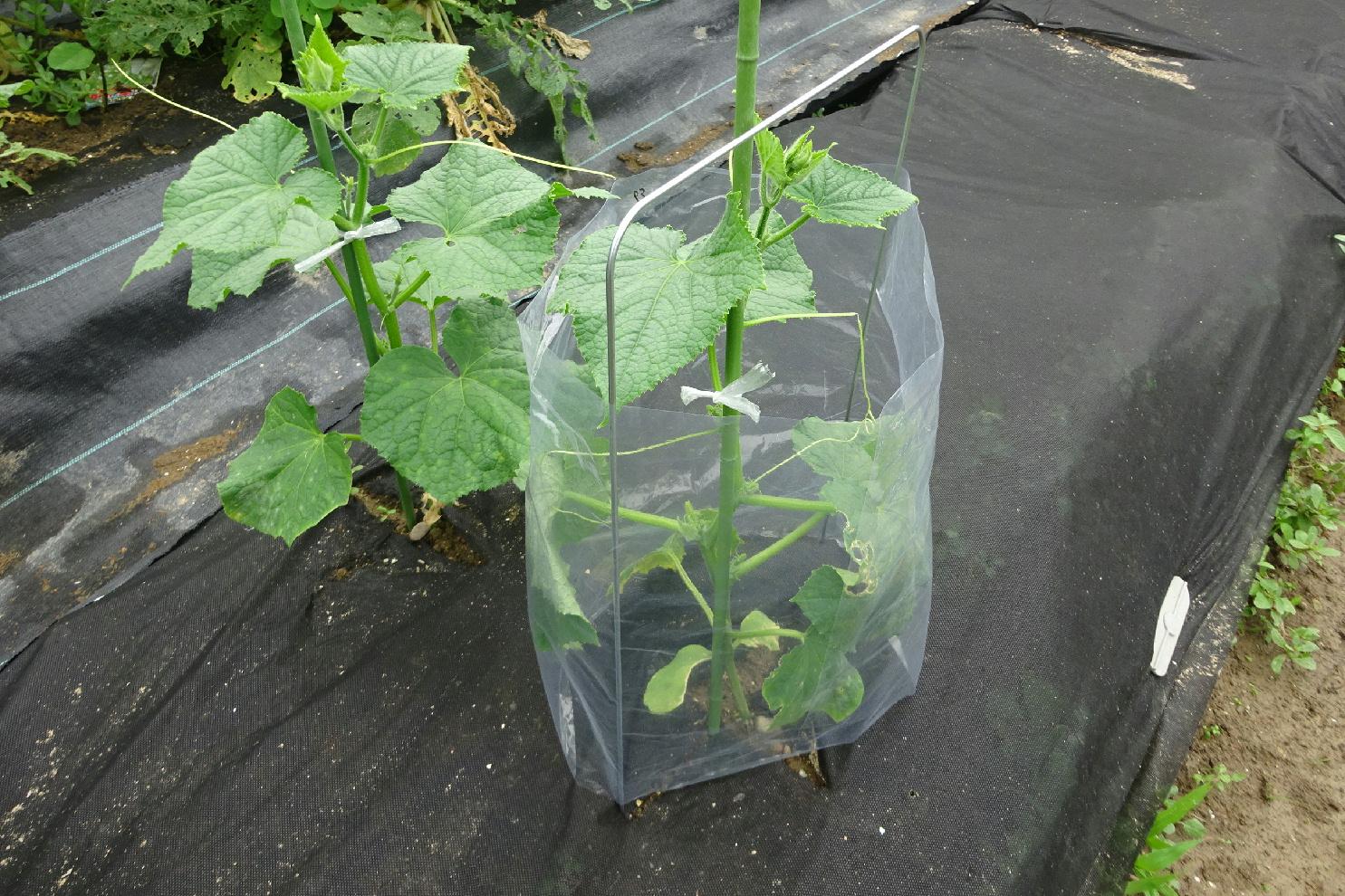 http://gr-garden.com/seedling-cover-step2a.jpg