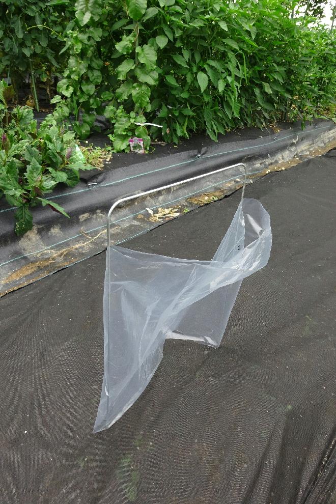 http://gr-garden.com/seedling-cover-step2b.jpg