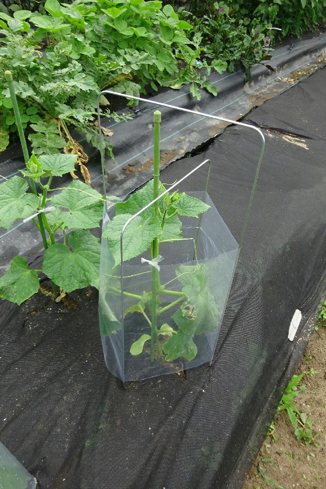 http://gr-garden.com/seedling-cover-step3a.jpg